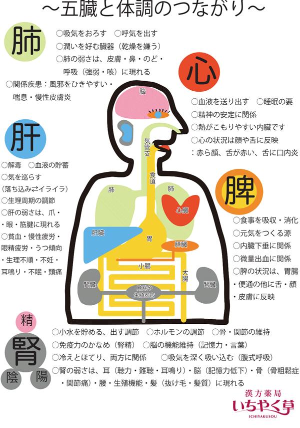 五臓と体調のつながり