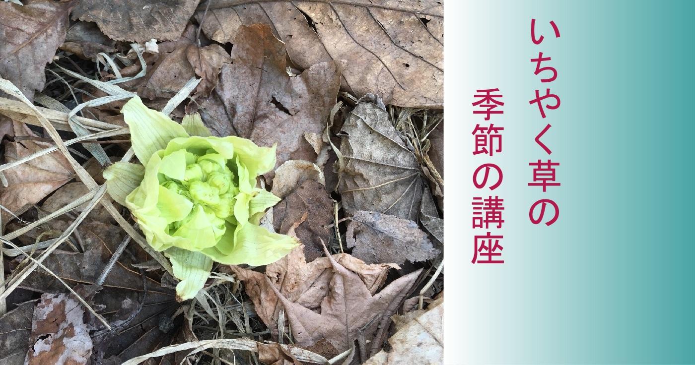 いちやく草の季節の講座