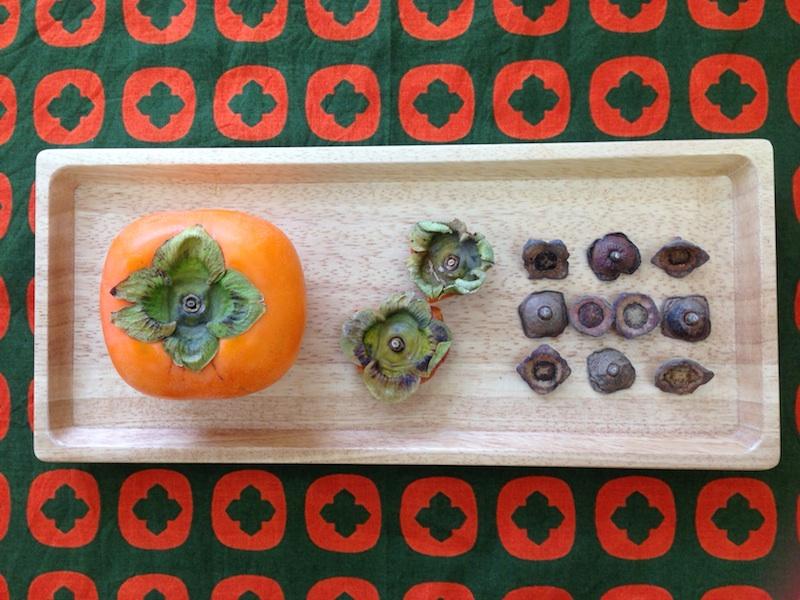 柿へたの変化