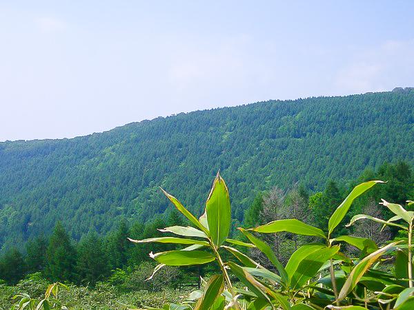 松寿仙工場見学3日目〜長寿の森林 笹現場2