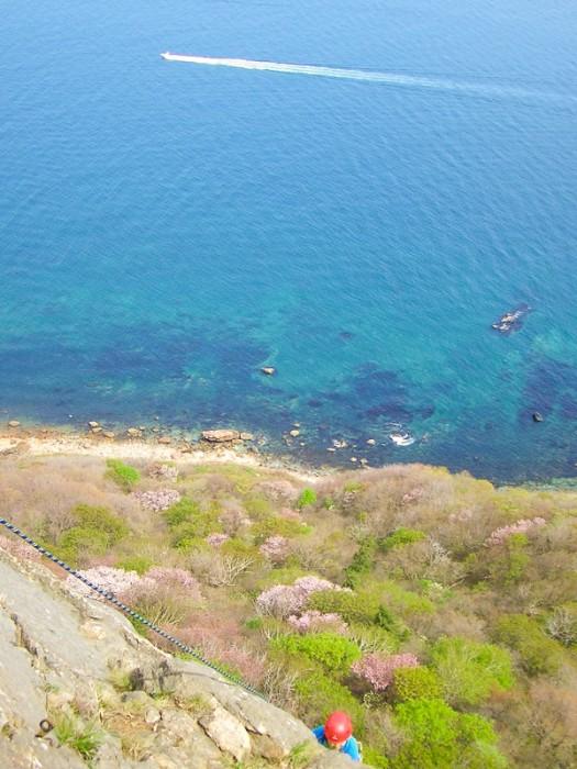 小樽赤岩の山桜