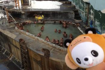 熱帯植物園さる温泉1
