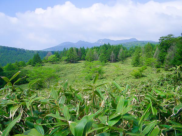 松寿仙工場見学3日目〜長寿の森林 笹現場3