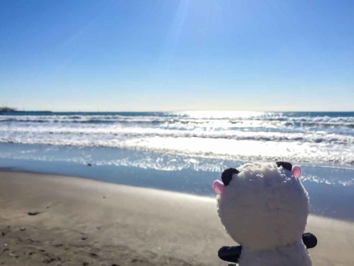 シンシン君と海