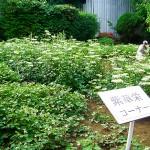 松寿仙薬草園全容