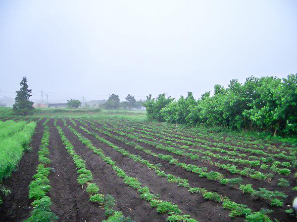 松寿仙〜薬草畑